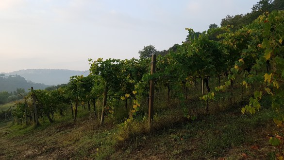 travel-with-wendy-cooking-in-italy-vineyards-of-umbria