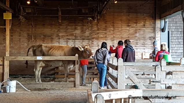 travel-with-wendy-cows-at-shelburne-farms-fall-in-love-with-vermont-www-travelwithwendy-net