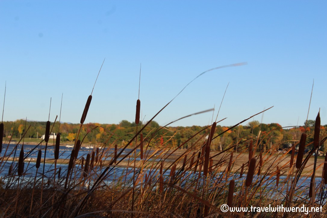 travel-with-wendy-vermont-cattails-and-fields-www-travelwithwendy-net