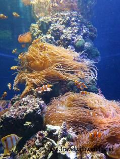 tww-the-anemone-tierpark-visit-holland