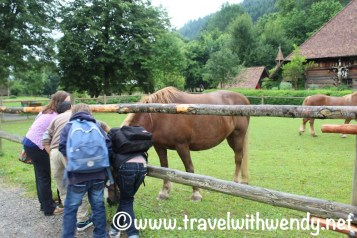 Horses on the farm - Black Forest