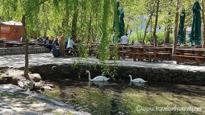 Picnics and Swans - KRKA