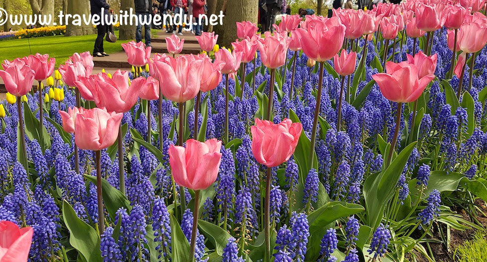 Pink and blue in Keukenhof
