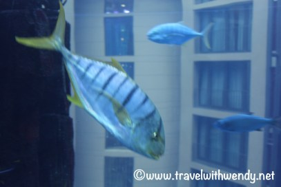 Sealife Aquarium - riding the Aquadom