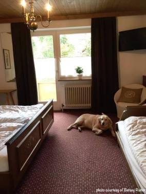 Ruiter Pup in Hotel Amadeus