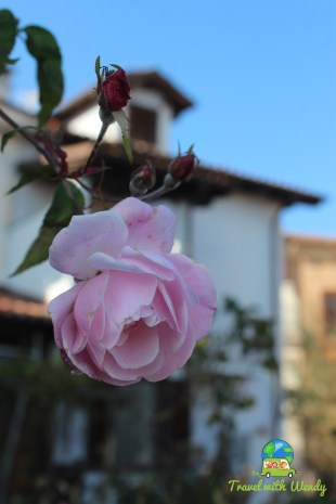 Flowers in bloom - Canelli
