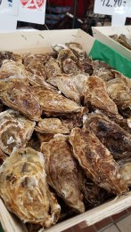 Oysters!!