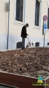 Truffle hunting - Asti