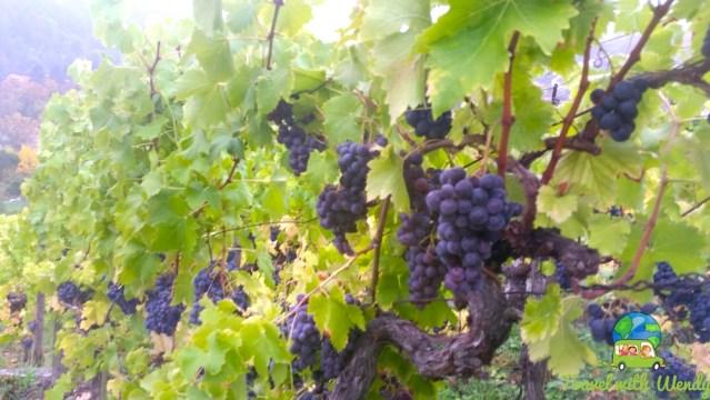 Harvest season in Esslingen