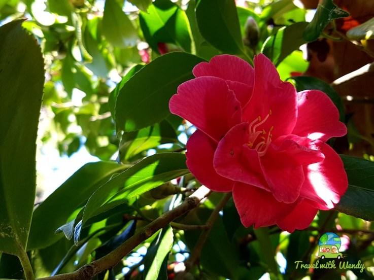 Wild flowers around Monserrate