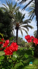 Gardens of Cannes
