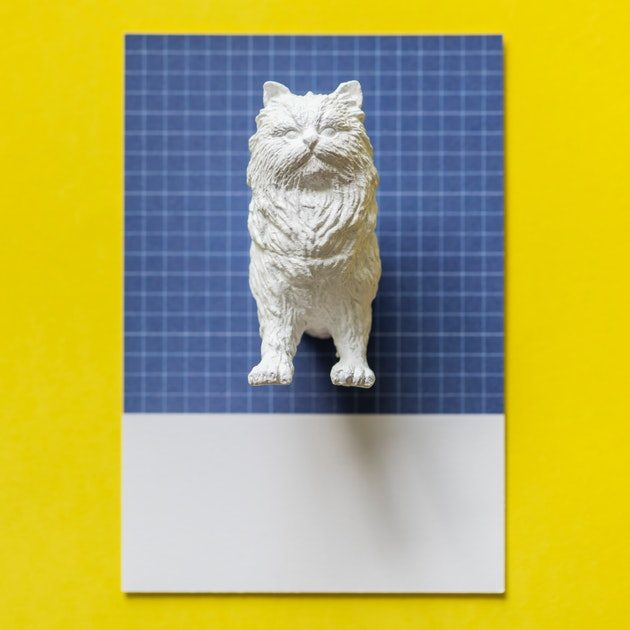 white mould of cat stuck to blue square paper