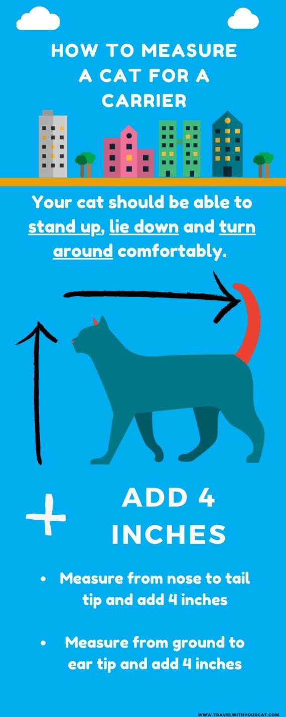 cat carrier size infographic