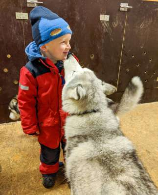kiss from a husky