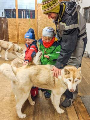 Patting the huskies, North Iceland itinerary