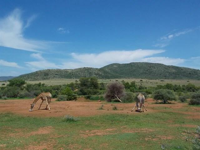 malari free safari - Pilanesberg South Africa