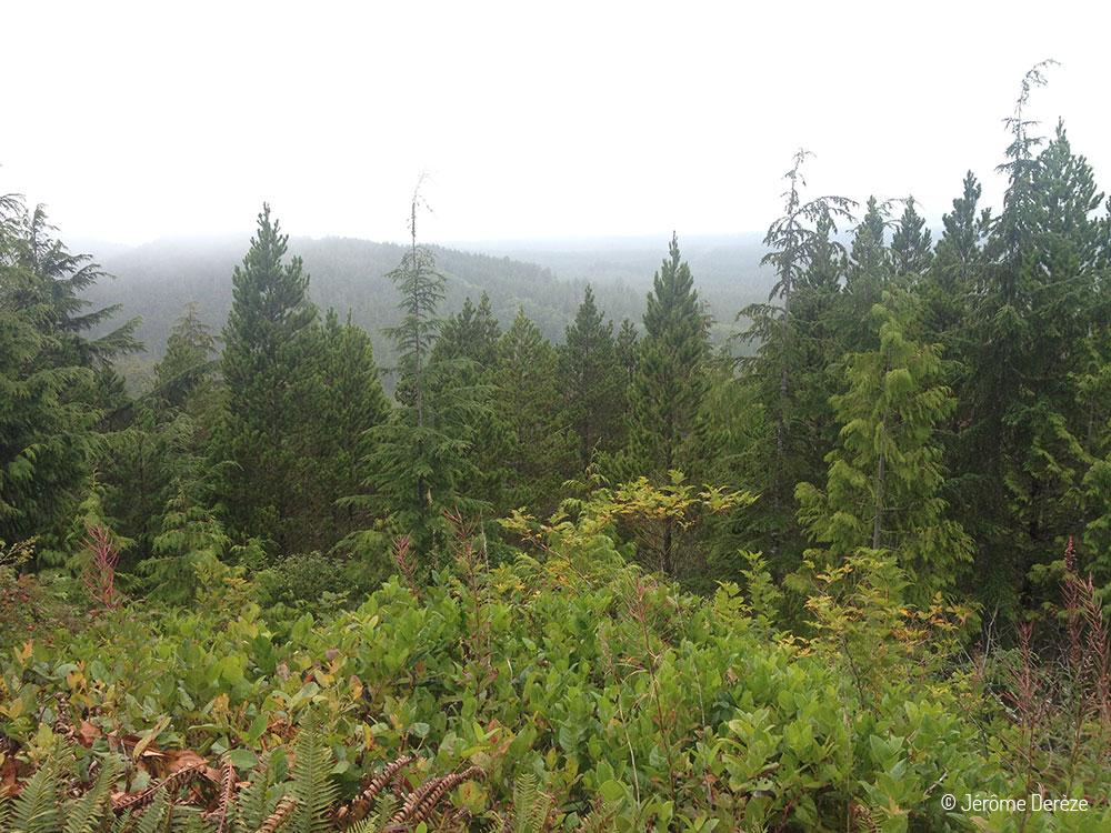 Nature et forêt sur l'île de vancouver