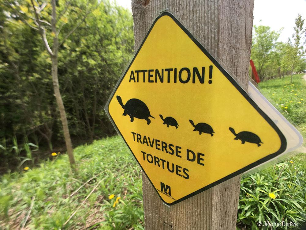 Panneau traversée de tortues