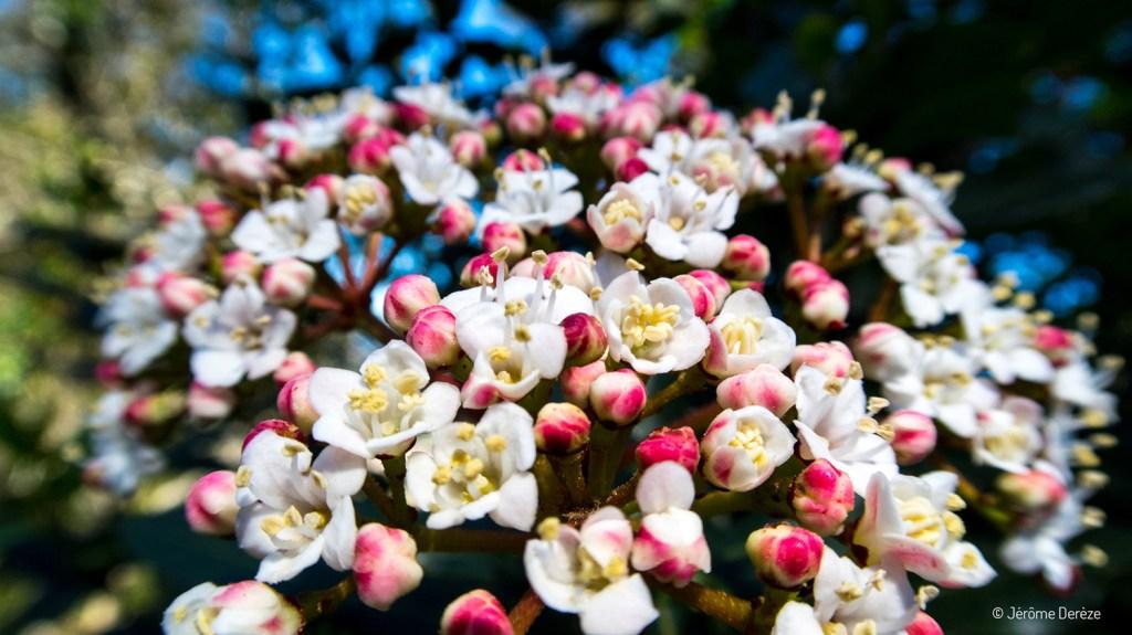 Fleurs à Sintra