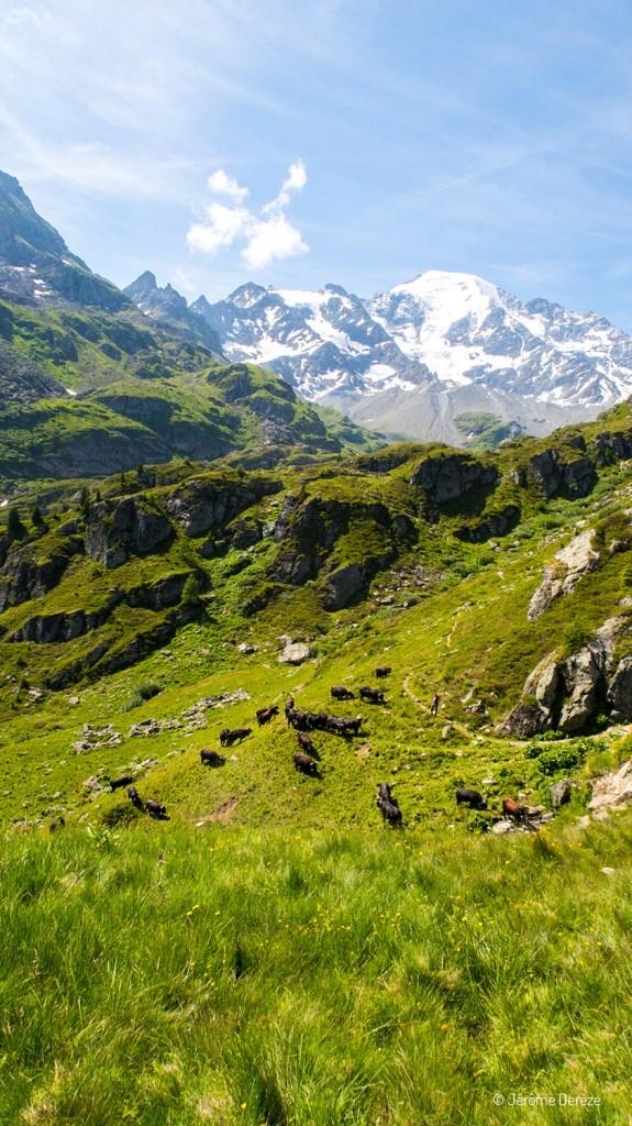 alpage à verbier en suisse