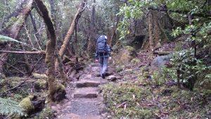 Climbing Mount Fortescue