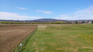 Farm meets Golf Course