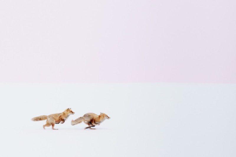 Travesia-pirenaica-fotografos-national-geographic-by-xalata-Hiroki Inoue
