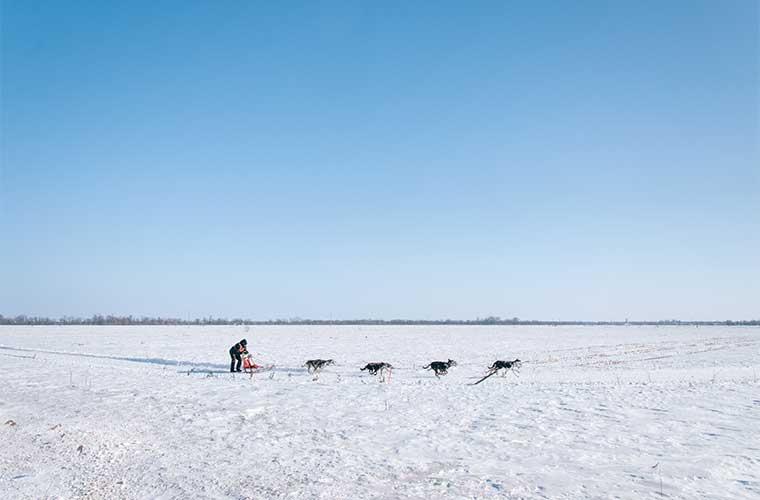 Carreras de trineos y esquís tirados por Perros: el Mushing / Foto: Ali Inay