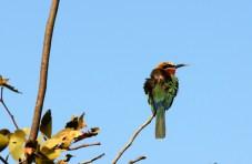Windswept Bird
