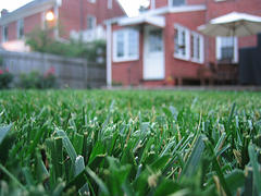 A random flickr lawn shot, not covered by copyright.
