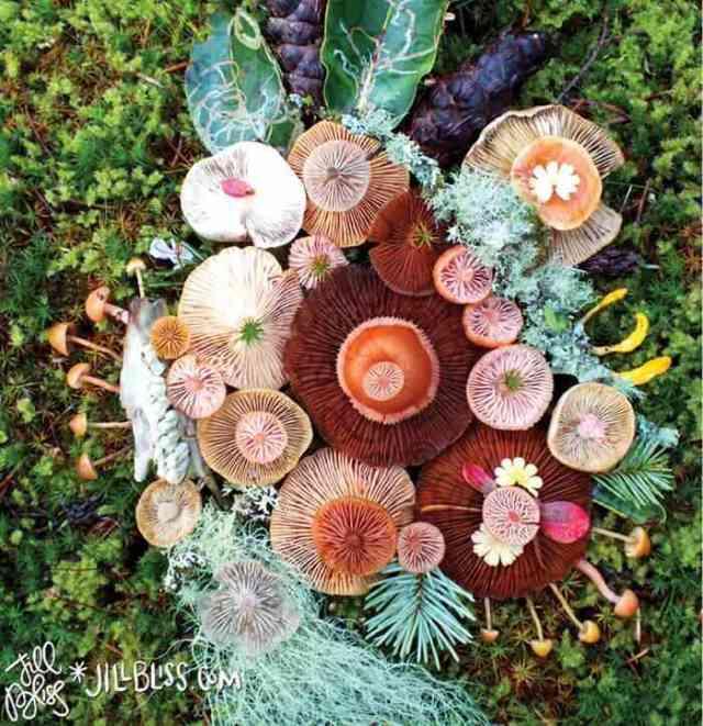mushrooms nature medley jill bliss 3 - Wow...Indahnya Jamur Liar Ini Bikin Takjub Bagi Yang Melihatnya