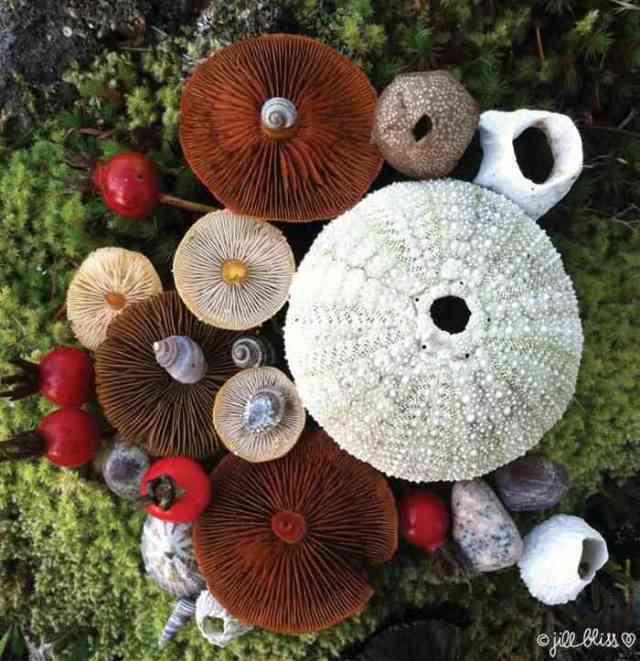 mushrooms nature medley jill bliss 7 - Wow...Indahnya Jamur Liar Ini Bikin Takjub Bagi Yang Melihatnya