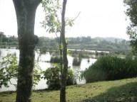Wetland8-e1350634133453