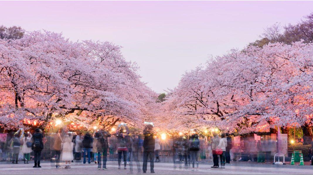 上野公園, 【東京景點】上野公園總覽與四季攻略 (上野動物園、東京都美術館、不忍池、上野東照宮)