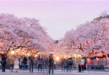 築地市場, 【東京景點】築地市場自由行攻略(含交通、必吃美食、營業時間)
