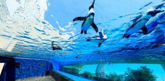 陽光水族館Sunshine Aquarium 1
