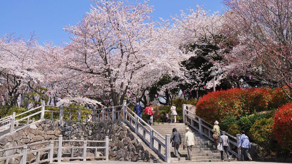 東京旅遊、東京自由行、日本必去景點, 【東京景點】東京10大必去公園景點推薦(東京迪士尼、代代木公園、上野公園)
