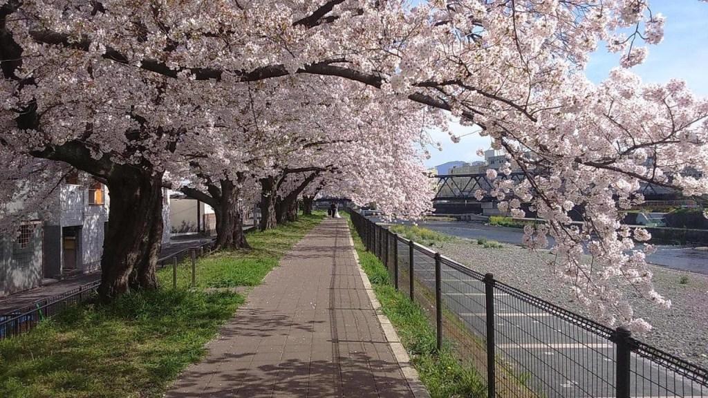 京都鴨川, 【京都景點】鴨川 (美食、跳烏龜、納涼床星巴克)京都必去納涼景點!