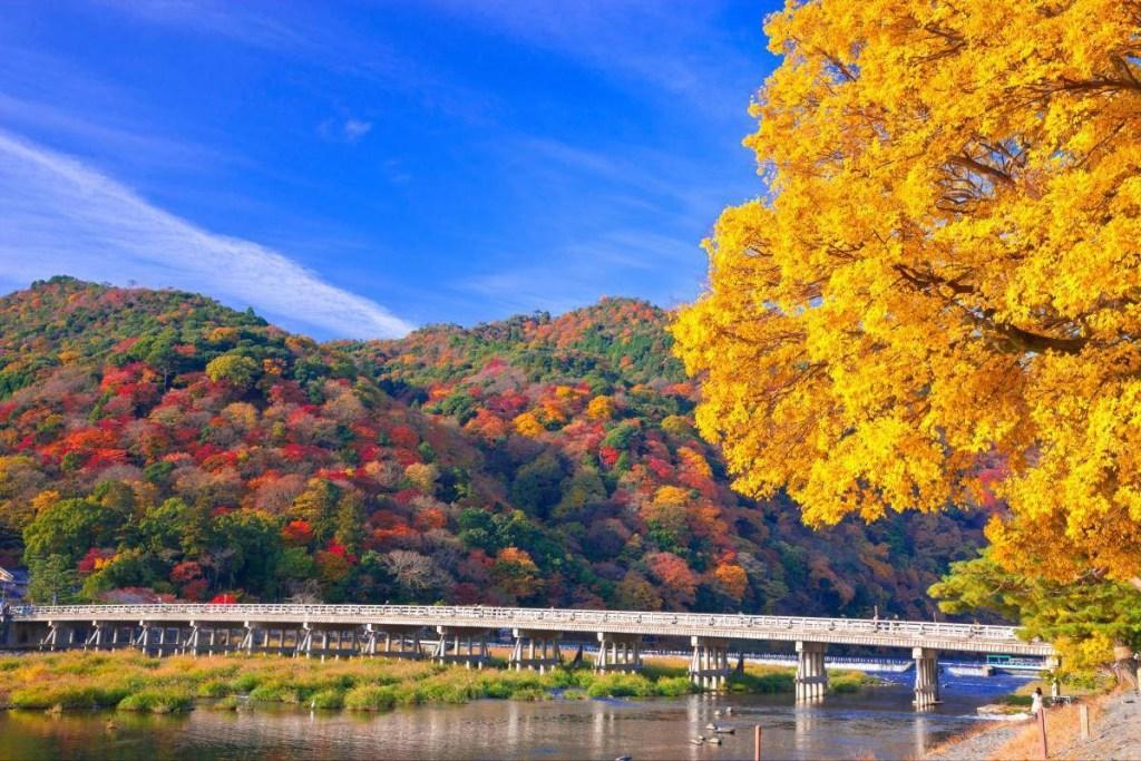 嵐山渡月橋, 【京都景點】嵐山渡月橋,嵐山必去賞櫻、賞楓、賞雪景點! (% Arabica咖啡廳)