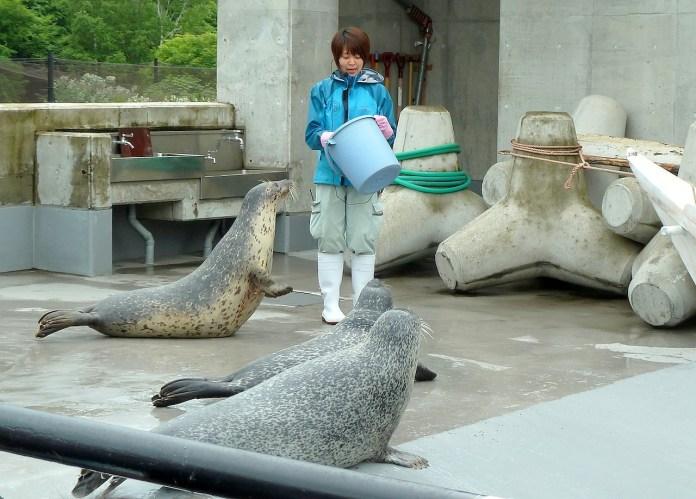 海豹餵食秀