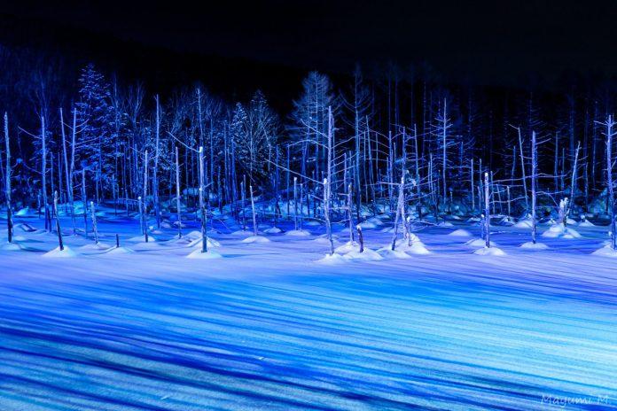 青池,冬。