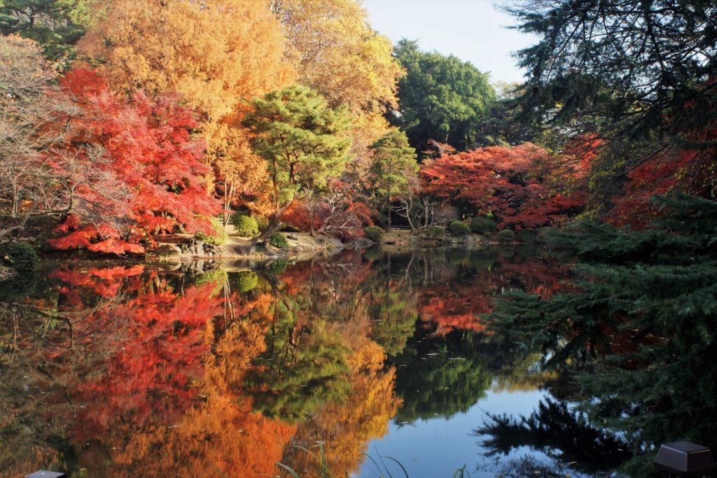 新宿御苑, 東京新宿御苑3大庭院四季攻略|含門票介紹,營業時間與入口交通地圖