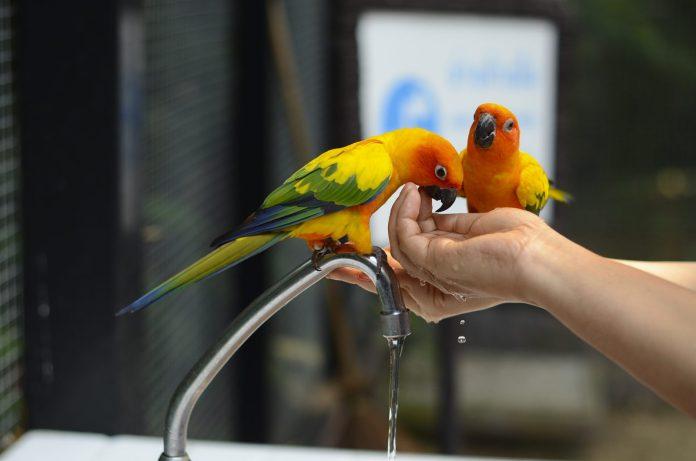 Safari World鸚鵡