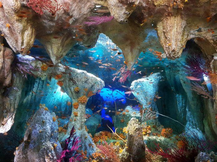 陽光水族館 7