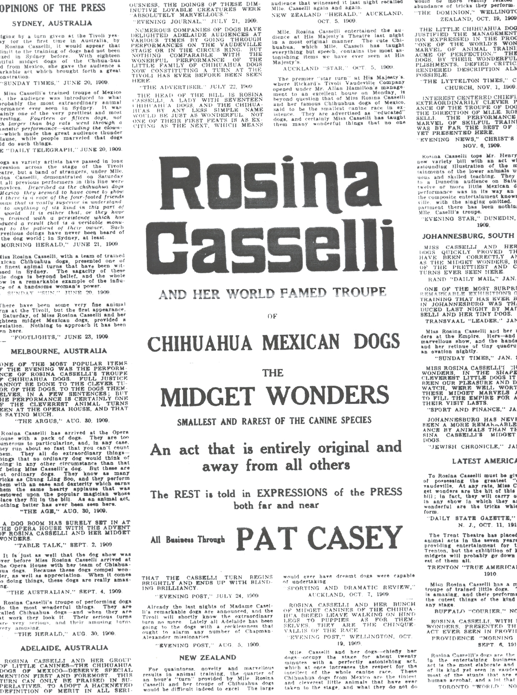 Rosina Casselli and Her Chihuahuas
