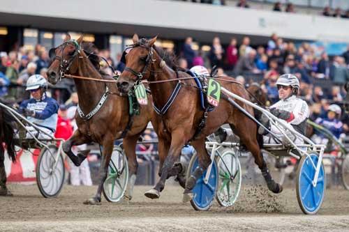 Punktum Skalflex vandt stayerløbet. Foto Eirik Stenhaug