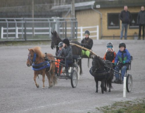 pony billund3