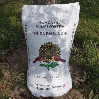Sunflower – Black Oil