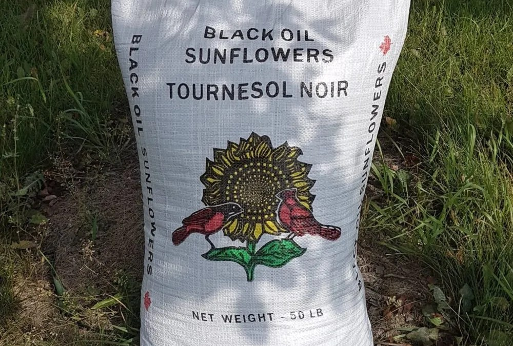 Sunflower – Black Oil