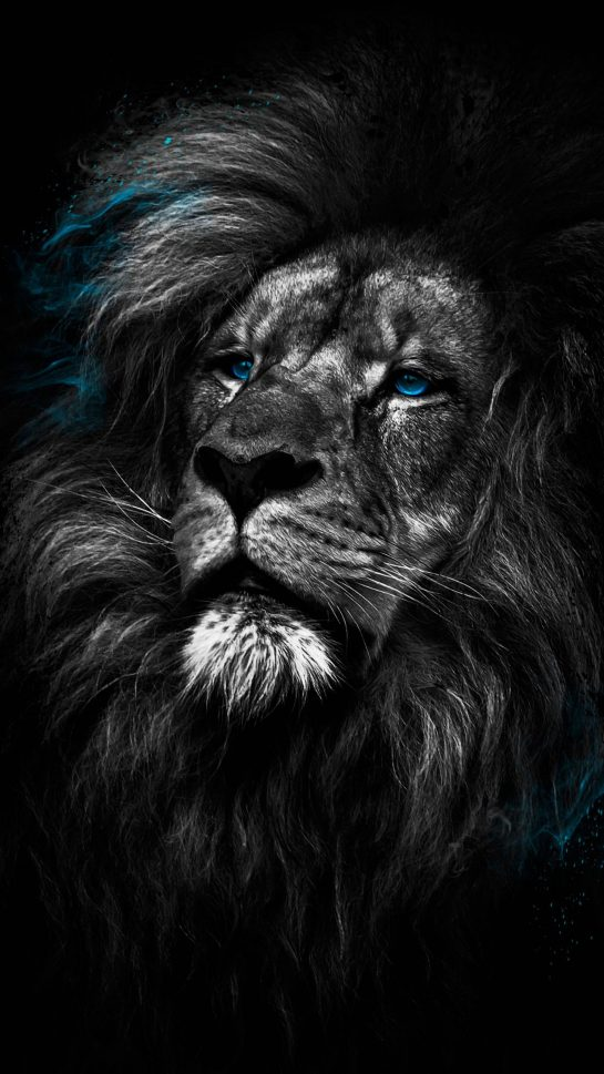 Lion Dark 4K Amoled Android Black Wallpapers